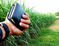 Bez zielonej trzciny, biznesy wytwarzaj? doch?d tak jak rolnicy fotografia stock