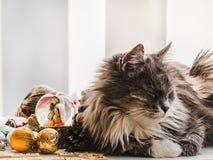 Bezaubern, flaumiges Kätzchen mit Weihnachtsdekorationen Haustierpflegekonzept lizenzfreie stockfotografie
