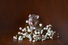 Bezaubernde dambo Ratte mit Gypsophilablumen auf einem braunen Hintergrund Festliches Bild