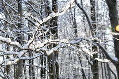 Bezaubernde Landschaft des verschneiten Winters Lizenzfreies Stockbild