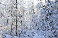 Bezaubernde Landschaft des verschneiten Winters Stockfotografie