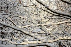 Bezaubernde Landschaft des verschneiten Winters Lizenzfreie Stockfotografie