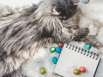 Bezauberndes Kätzchen, Sketchbook mit einer Leerseite und Ostereiern lizenzfreie stockbilder