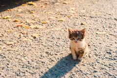 Bezdomna chora niefortunna mała figlarka na ulicie zdjęcie stock