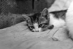 Bezdomna figlarka, samotna, kot, koty ulica potrzeba przyjaciele czarny i biały obrazy royalty free