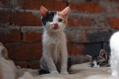 Bezdomna figlarka, samotna, kot, koty ulica potrzeba przyjaciele zdjęcie royalty free
