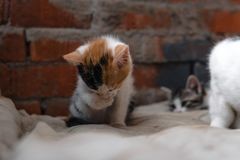 Bezdomna figlarka, samotna, kot, koty ulica potrzeba przyjaciele obraz royalty free