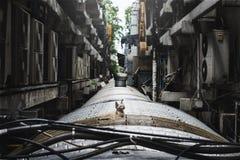 Bezdomnego dziecko kota miasta Osamotniony pojęcie Obraz Stock