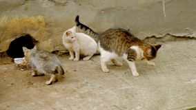 bezdomni koty Ciężki życie pokrzywdzony losowo zwierzęta zbiory
