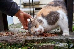 Bezdomni koty na ulicznej wp8lywy afekci od mężczyzna i jedzą fotografia stock