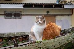 Bezdomni koty na ulicznej wp8lywy afekci od mężczyzna i jedzą obraz stock