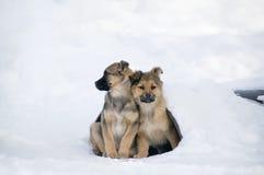 Bezdomni szczeniaki przylegali each inny utrzymywać ciepły Problemu stra fotografia royalty free