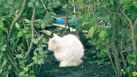 Bezdomny biały kota obsiadanie