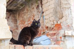 Bezdomny czarnego kota obsiadanie na ruinach zaniechany dom obrazy royalty free