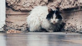 Bezdomny czarny i biały kot obrazy stock