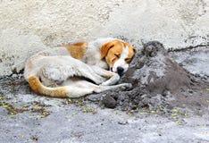Bezdomny dosypianie pies w ulicie Zdjęcie Royalty Free