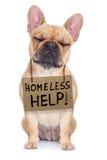 Bezdomny jest prześladowanym fotografia stock