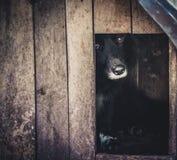 Bezdomny jest prześladowanym przy zwierzęcym schronieniem zdjęcia royalty free