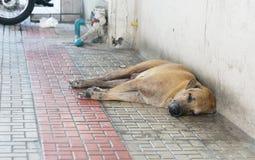 Bezdomny jest prześladowanym Obrazy Stock