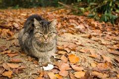 Bezdomny kot zdjęcia stock