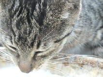 Bezdomny kot I Jego łza Obrazy Stock