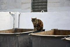 Bezdomny kot na śmieciarskim zbiorniku fotografia stock