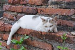 Bezdomny kot na świątynnej ścianie Obraz Stock