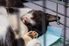 Bezdomny kot w klatce Zdjęcie Stock