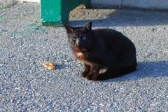 bezdomny kot z niebieskimi oczami siedzi na drodze fotografia royalty free