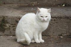 bezdomny kota biel Zdjęcie Stock
