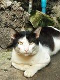 Bezdomny kota gapić się zdjęcie stock