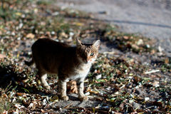 Bezdomny kota portret na ulicie Selekcyjna ostrość Obraz Stock
