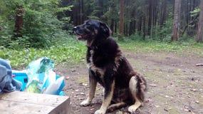 bezdomny pies pets Psy chodzą na ulicie Pies gubił swój właściciela fotografia royalty free