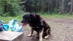 bezdomny pies pets Psy chodzą na ulicie Pies gubił swój właściciela fotografia stock
