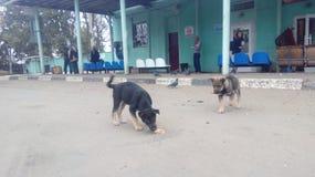 bezdomny pies pets Psy chodzą na ulicie Pies gubił swój właściciela zdjęcia royalty free