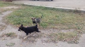 bezdomny pies pets Psy chodzą na ulicie Pies gubił swój właściciela obrazy stock
