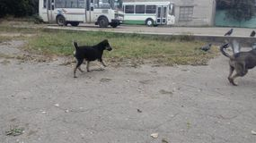 bezdomny pies pets Psy chodzą na ulicie Pies gubił swój właściciela zdjęcia stock