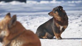 Bezdomny pies siedzi na śniegu w zimy zezowania oczach od silnego wiatru problem psi bezdomny zwierzęta domowe outdoors zbiory