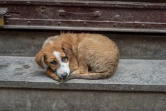 Bezdomny przybłąkany pies zdjęcia royalty free