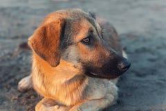 Bezdomny Psi portret zdjęcie royalty free