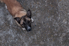 Bezdomny psi przyglądający up Obraz Stock