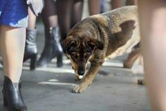 Bezdomny psi szuka jedzenie na ulicie fotografia stock