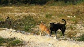 Bezdomny psy w pustkowiu w Tajlandia Azjatycka ulica swobodny ruch zbiory wideo