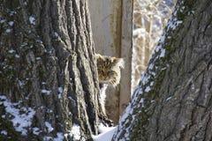 Bezdomny puszysty kot między drzewami Smutny spojrzenie fotografia stock