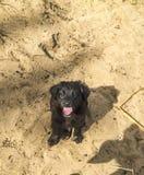 Bezdomny samotny pies, szczeniak na piasku Zdjęcia Stock