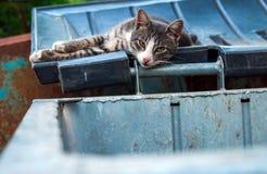 Bezdomny smutny kot kłaść na deklu pojemnik na śmiecie Zdjęcia Stock
