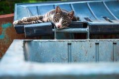 Bezdomny smutny kot kłaść na deklu pojemnik na śmiecie na letnim dniu Obrazy Royalty Free