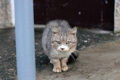 Bezdomny szary kota dosypianie pod śniegiem fotografia stock