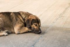 Bezdomny tajlandzki psi dosypianie Zdjęcia Royalty Free