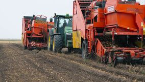 Combine harvester harvest potato. Bezenchuk, Russia - September 14: Combine harvester and a tractor in a field harvest potato on September 14, 2017 in Bezenchuk stock video footage